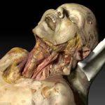 Penggunaan cadaver pada praktikum anatomi mahasiswa Fakultas Kedokteran